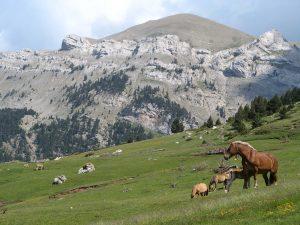 _11066_serrat-terrers-cavalls-del-vent